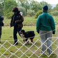 Louisa, Figure 8