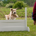Sadie, High Jump