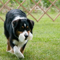 Louisa Retrieving
