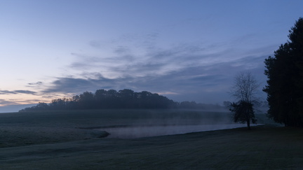 Farm pond, dawn
