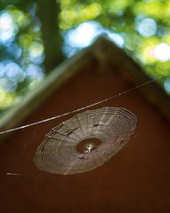 Spiderweb and picnic shelter